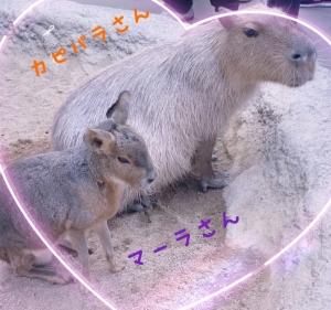 日本橋・谷町九丁目のリラクゼーションサロン M's SWEETの写メ日記 動物♡画像
